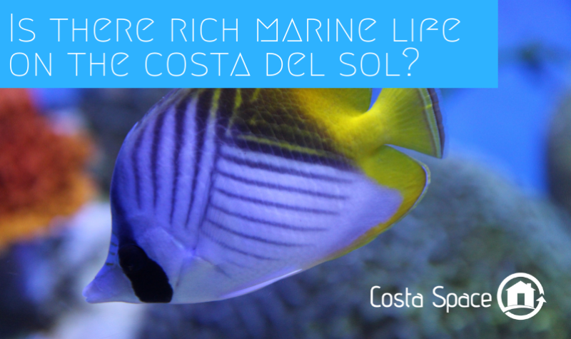Is there rich marine life on the Costa del Sol?